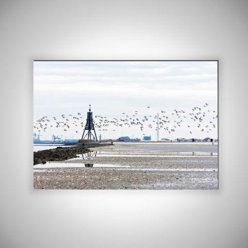 Kugelbake mit Vogelschwarm Querformat | 3mm Alu-Dibond Galerie Print